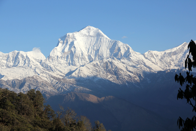 A side view of glacier part of the mountain with some leaves at the front of picture in Ghorepani Poon Hill Trek.